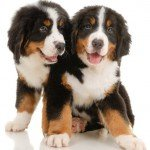 Home Child Safety Tips for Parents-Puppies
